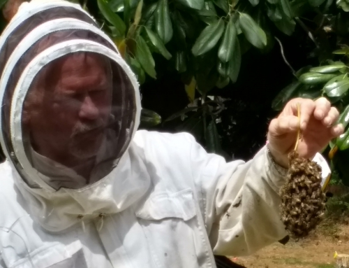 3000 Bees Will Support our Community Garden